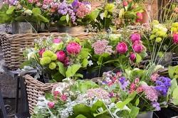 Brevet professionnel Fleuriste