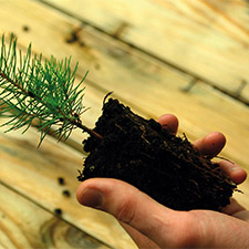 Filière Bois et Forêt : une économie bien implantée sur le territoire